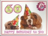 60th birthday bulldogs