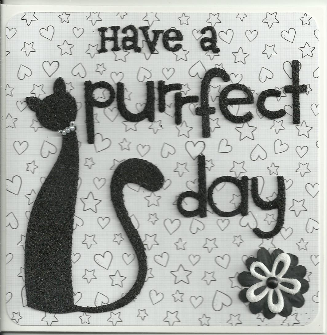 Purrfect day 5