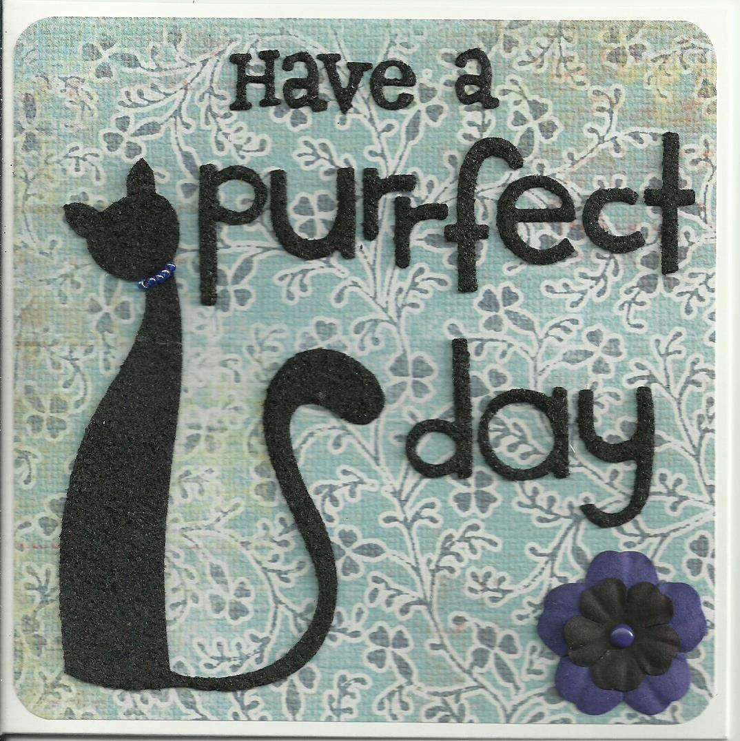 Purrfect day 6